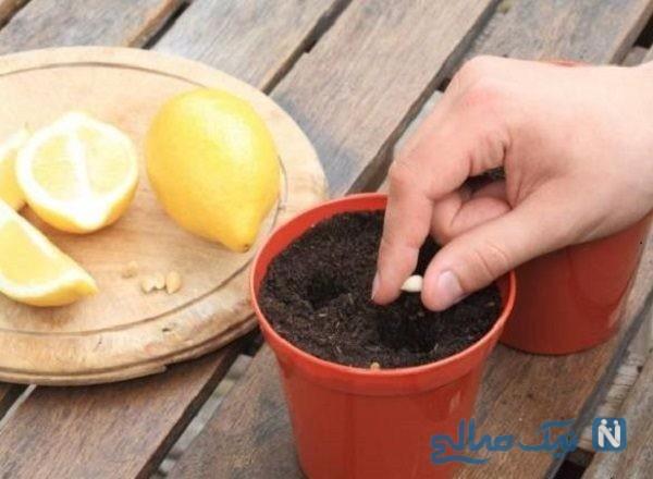 راهکاری بسیار ساده برای جدا کردن هسته لیمو ترش