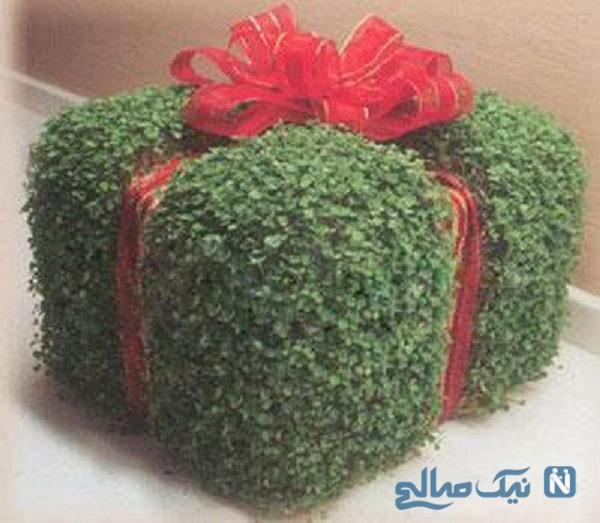 سبزه هفت سین به شکل جعبه کادو