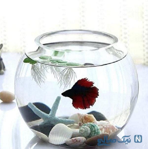 تزیین تنگ ماهی