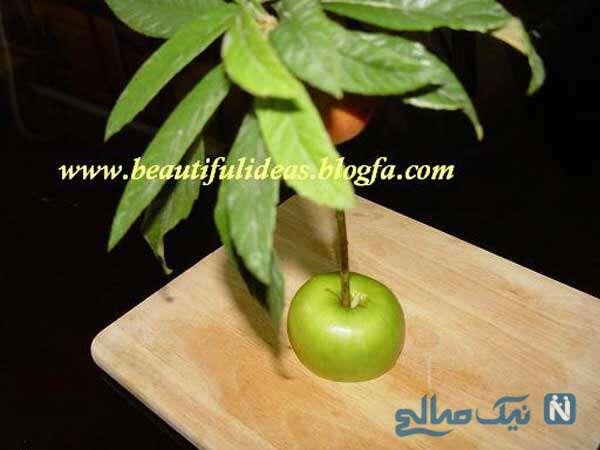 مدل های متنوع و جالب تزیین سیب