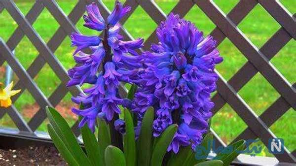 اموزش رنگ کردن گل طبیعی