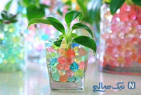 خاک ژله ای جایگزین مناسب خاک گلدان های خانگی