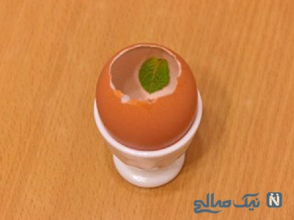 ژله تخمه مرغی
