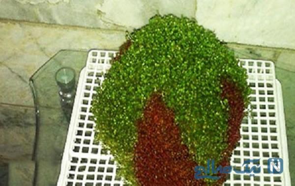 سبزه عید دو رنگ