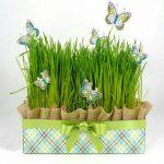بهترین زمان کاشت سبزه برای عید