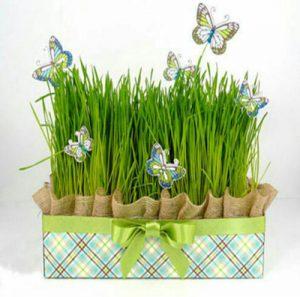 بهترین زمان کاشت سبزه