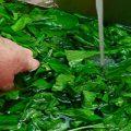 مناسب ترین روش برای شستشو و سالم سازی سبزیجات
