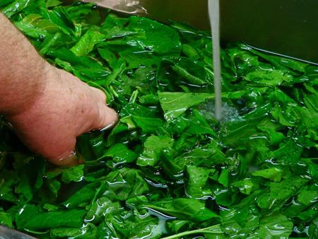 شستشو و سالم سازی سبزیجات