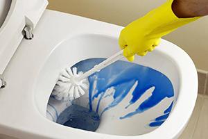 چگونه مگس و حشرات ریز توالت را از بین ببریم؟