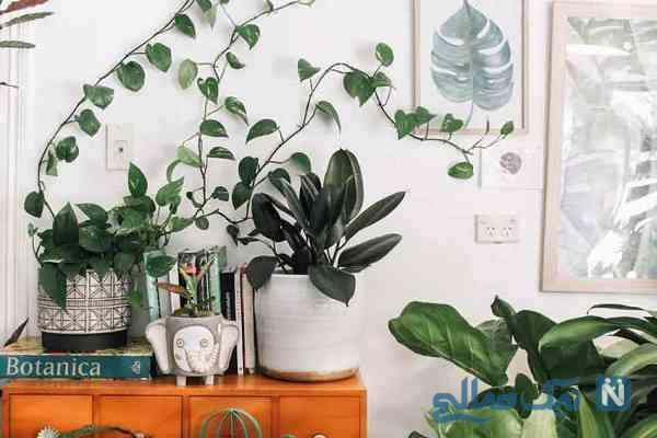 اصول نگهداری از گیاهان آپارتمانی