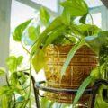 اصول و شرایط نگهداری و مراقبت از گیاهان آپارتمانی