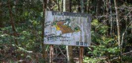 جنگل آئوکیگاهارا جنگلی برای خودکشی در ژاپن!