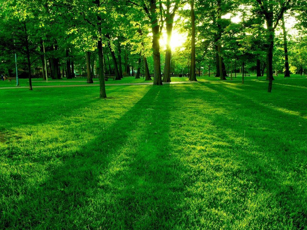 خواص رنگ سبز