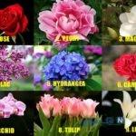 بگو کدام گل را دوست داری تا بگویم چه شخصیتی داری