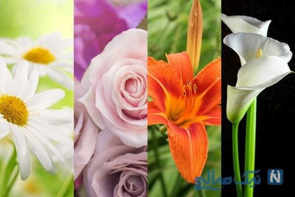 شخصیت شناسی گل مورد علاقه