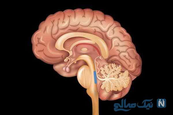 این مواد مخدر مغزتان را می کشد