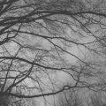دو عارضه ناشی از هوای ابری