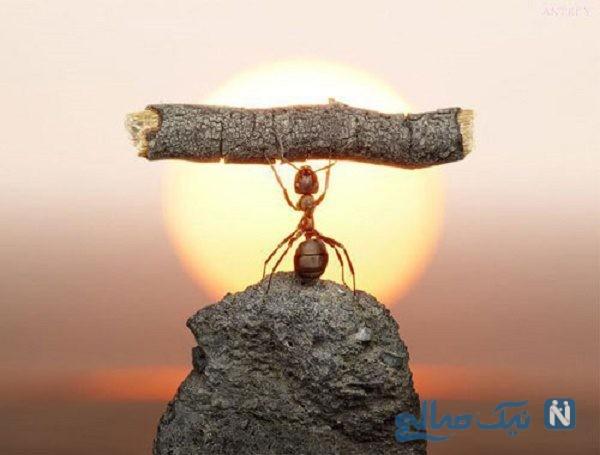 راه های تقویت اراده چیست؟