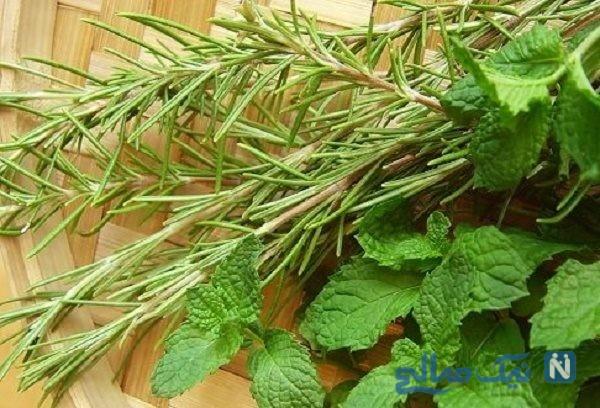 تقویت حافظه با گیاه درمانی!!