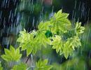باران بهاری به درمان این بیماری کمک می کند!