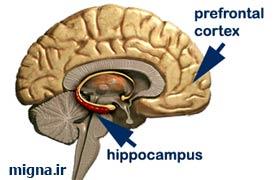 افراد با این توانایی، مغز ویژه ای دارند