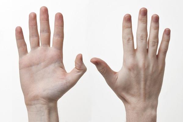 رابطه انگشتان و تستوسترون