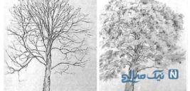 تست خودشناسی با نقاشی کردن درخت+ تصاویر