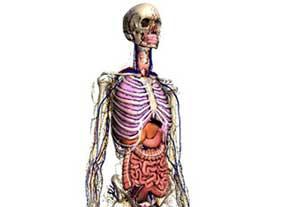 اعضای بدن شما چقدر میارزند؟