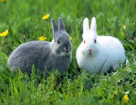 نگهداری خرگوش ها