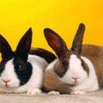 چگونگی نگهداری و مراقبت صحیح از خرگوش ها