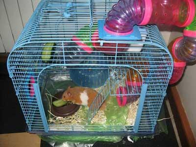 درباره همسترها