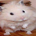 درباره همسترها و روش نگهداری آن ها بیشتر بدانید