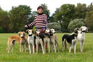 معرفی نژاد سگ تازی, سگ سالوکی