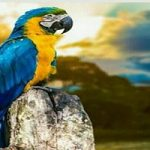 شناخت طوطی ماکائو