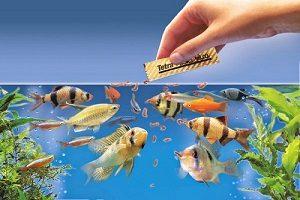 اصول تغذیه ماهی های آکواریوم و انواع آن