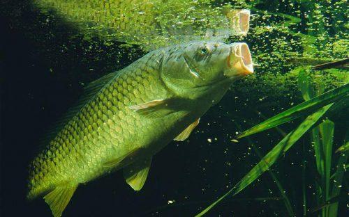 تغذیه ماهی