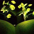 استفاده از گیاهان درخشان جایگزین لامپ!