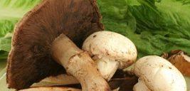 شناسایی عامل مسمومیت ها با قارچ سمی
