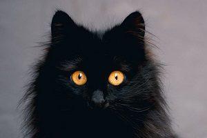 علت درخشش چشم گربه در شب به صورت علمی