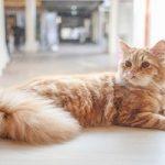 اصول مربوط به نگهداری از گربه در منزل