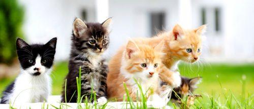 اصول نگهداری گربه