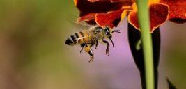 زنبورها می توانند محاسبات ریاضی انجام دهند