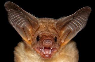 خفاش ، تنها پرنده پستاندار دنیا