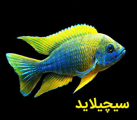 ماهیان گوشتخوار