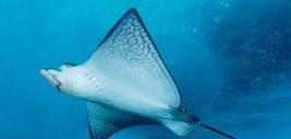 اطلاعات جالب در باره سفره ماهی این ماهی زیبا و خطرناک