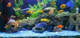 پرورش و نگهداری ماهی های زینتی زیبا
