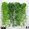 معرفی ۵ گیاه آپارتمانی رونده که تا ثریا میرویند