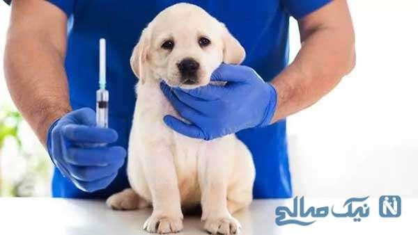 واکسنهای سگها