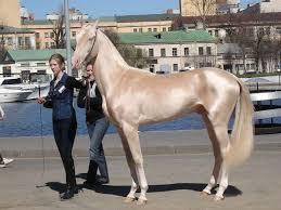 زیباترین اسب دنیا و گرانترین اسب دنیا + تصاویر
