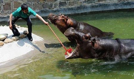 اسب آبی که به مسواک زدن علاقه دارد + عکس